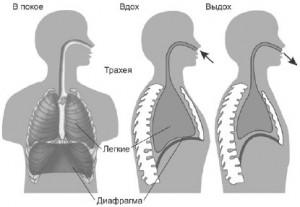 Механика дыхания