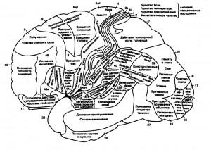 Патология проведения импульса по нейропроводящей системе