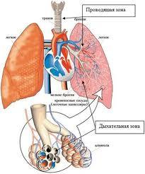 Увеличение работы дыхания и утомление дыхательной мускулатуры
